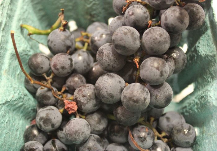 Celebrating the Concord Grape